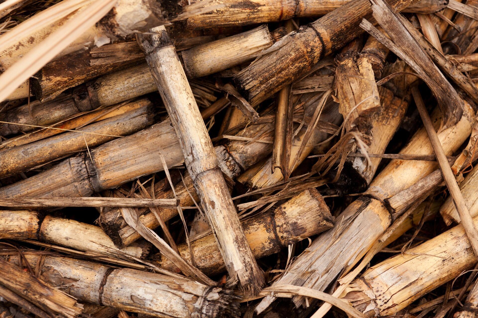 Une récolte de canne à sucre.