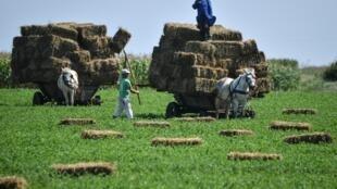 Des fermiers ramassent les balles de foin dans un champ à côté du village de Smardan, dans le sud de la Roumanie (image d'illustration).