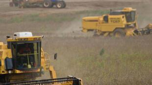 No Paraná, colheita da soja acelera e já alcança 41% da área plantada. Fonte: ANPr