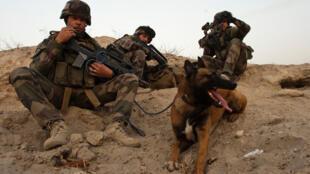 Le flair d'un chien reste encore le meilleur instrument pour déceler l'adversaire et dénicher les explosifs.