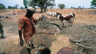 Au Burkina Faso, la crise sécuritaire engendre une crise du bétail.