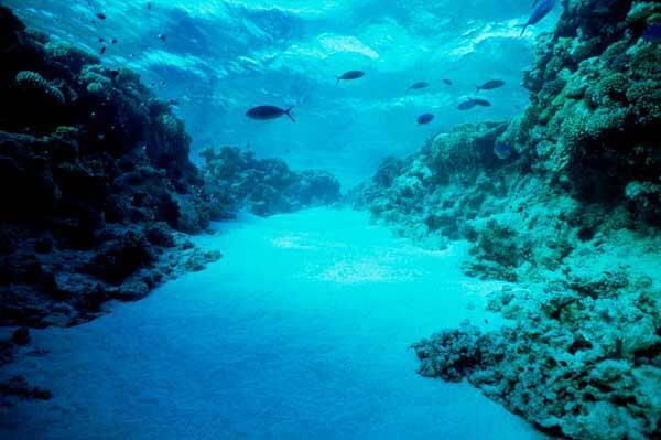 La mise en place d'un réseau d'aires marines protégées représente un outil prometteur de gestion des peuplements de poissons.
