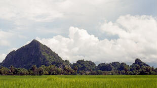 Des rizières de Prey Nup, au Cambodge.