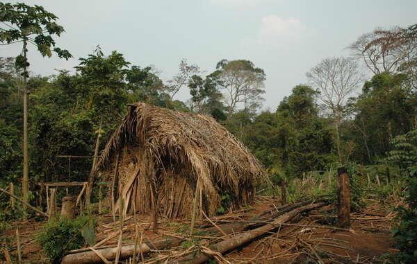 """La choza y el huerto del """"Último de su Tribu"""", con cultivos de mandioca y otros vegetales."""