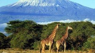 Mlima Kilimanjaro nchini Tanzania