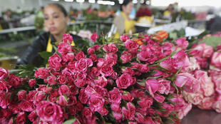 La rose est emblématique de la mondialisation du marché de la fleur.