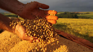 Produtores paranaenses se beneficiam do aumento nos preços da soja e do milho nos mercados. Cascavel  09 03 2018