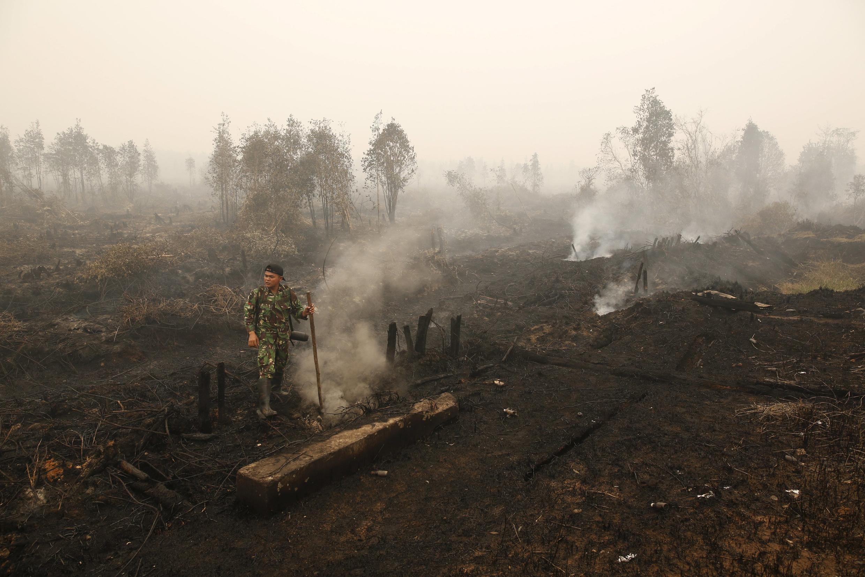 Một góc rừng bị đốt gần Palangkaraya, trung tâm đảo Kalimantan, Indonesia, ngày 28/10/2015. Đây là một nguồn phát thải carbon quan trọng.