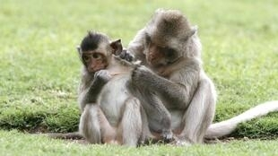 A macaque monkey and her baby