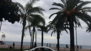 Les palmiers de la promenade des Anglais à Nice.