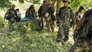 El resultado histórico de las operaciones de erradicación de las plantaciones de coca en Perú de los dos últimos años fue borrado por la pandemia de coronavirus, que congeló los operativos (Foto de ilustración).