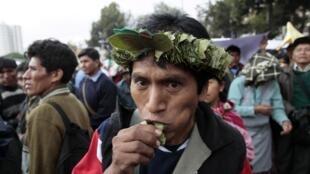 Manifestante mastiga folha de coca durante protesto em La Paz