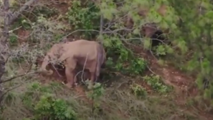 ElephantYunnan