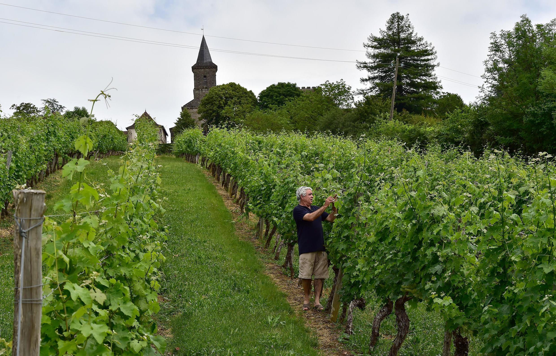 Производство вина во Франции должно упасть на 29% в 2021 году до «исторического минимума»