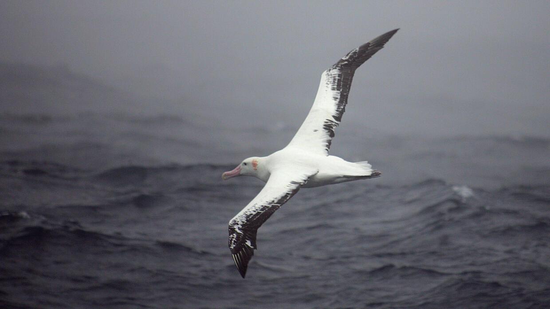Nouvelles technologies - L'albatros, cyber-espion des Mers