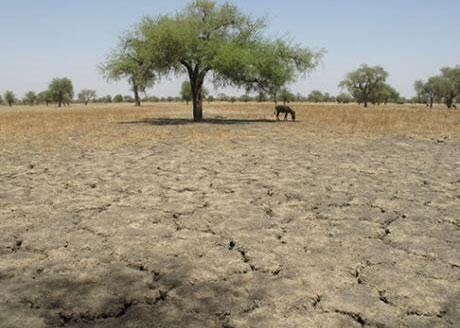 Sequía en Chad.