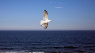 Une mouette prend son envol au-dessus de l'océan.