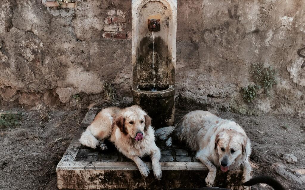 Dogs cool down by a public fountain during an unusual early summer heatwave, Rome, 24 June 2019.