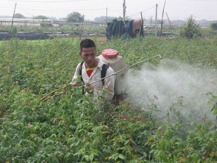 Nhiều nghiên cứu tại Pháp gần đây cho thấy mức độ độc hại của thuốc trừ sâu, diệt cỏ lớn hơn rất nhiều so với những gì được công bố. (DR)