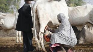Wasu Fulani makiyaya a Najeriya