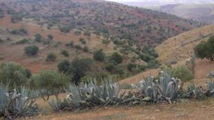 A Relizane, au sud-ouest d'Alger, des charniers ont été découverts par un militant des droits de l'Homme.