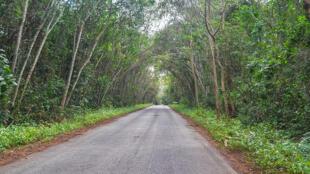 Dans une forêt de Côte d'Ivoire.