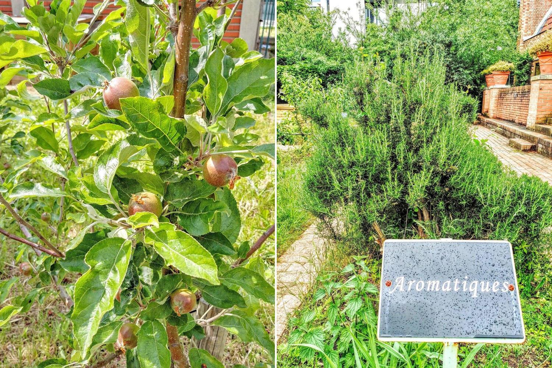 Vườn Bercy có trồng trái cây và rất nhiều giống rau thơm