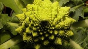 L'aspect fractal d'un chou romanesco.