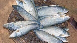 Au Gabon, le kilo de poisson coûte aujourd'hui 4000 francs CFA.