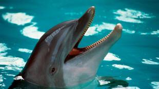 Segundo Ongs francesas, golfinhos e baleias sofrem com os maus-tratos em parques aquáticos.
