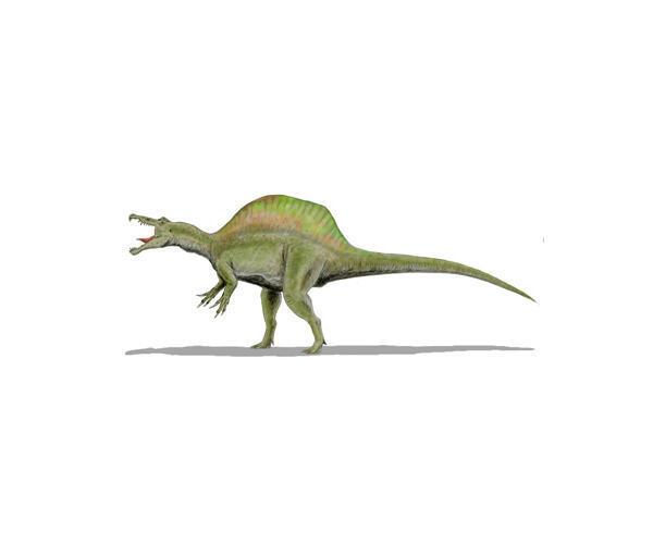 Le spinosaure, un des premiers théropodes, était bipède, occasionnellement quadrupède, vivant au Crétacé supérieur, dans un milieu semi-aquatique.
