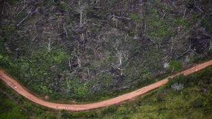 Biodiversity loss and climate change are mutually reinforcing, but have traditionally been treated as separate crises