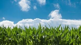 Désormais, les fermiers blancs peuvent postuler pour obtenir un bail de 99 ans sur une terre agricole nationalisée.