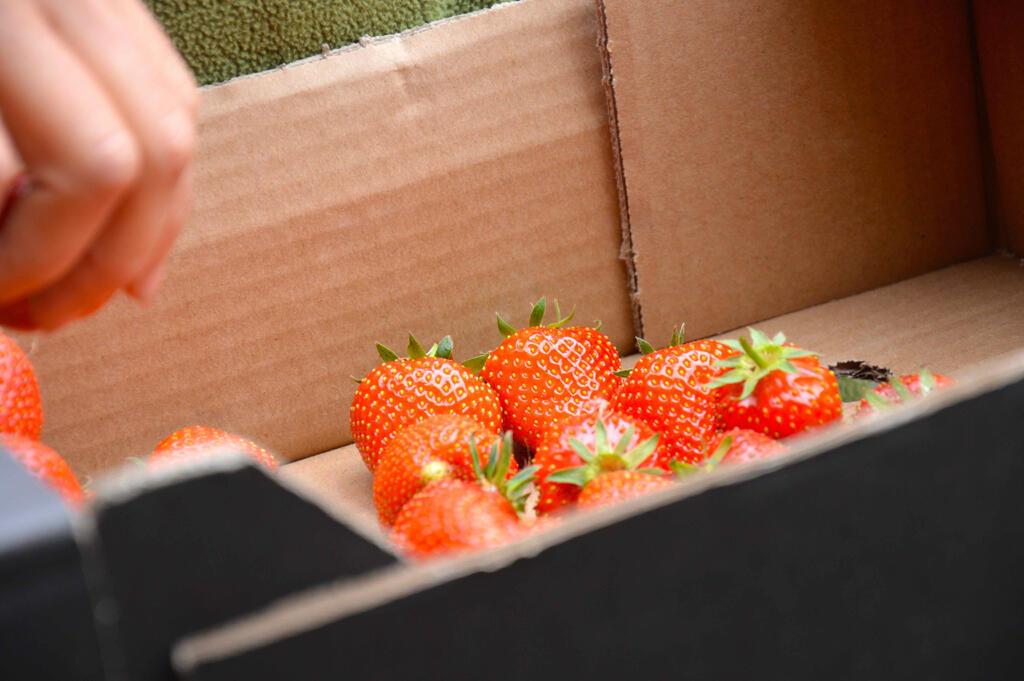 法國人喜歡的草莓