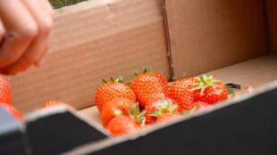 法国人喜欢的草莓