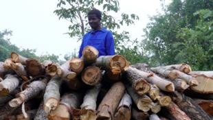 Les charbonniers apprennent maintenant à construire des fours améliorés pour limiter leur consommation de bois et augmenter leur productivité.