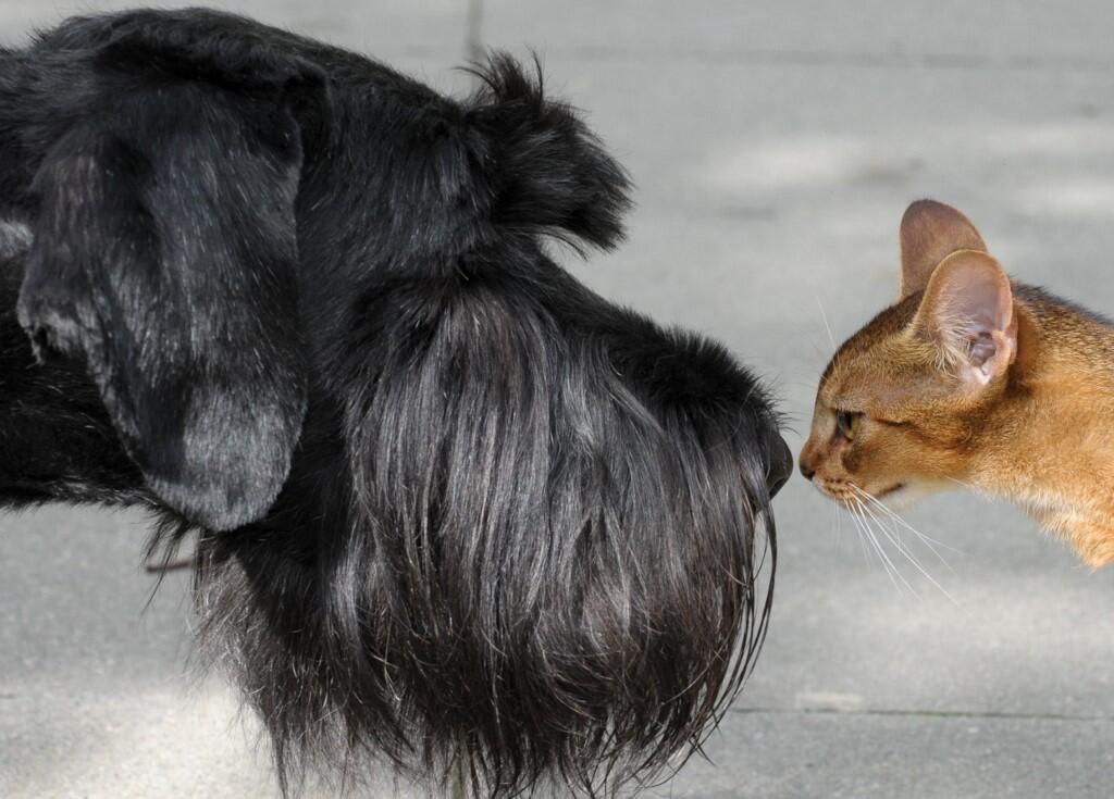 Par nature, le chien est omnivore et le chat est carnivore (photo d'illustration).