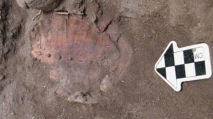 Carapaces de tortues trouvées sur le site archéologique d'Hilazon Tachtit en Israël par Natalie Munro et son collègue Leore Grosman, de l'Université hébraïque de Jérusalem.