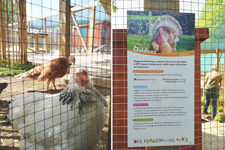 Nông trại trong công viên Suzanne Lenglen có  nuôi thỏ, gà tây, ngỗng vịt