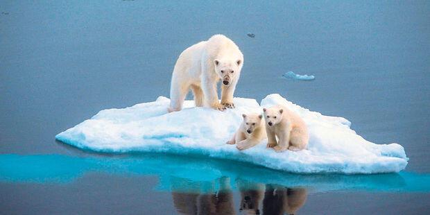 برای شنیدن توضیحات جلال ایجادی- کارشناس ارشد محیط زیست بر روی تصویر کلیک کنید-تصویر تزئینی است