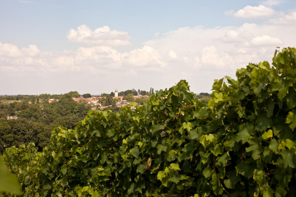 Гасконь - край винограда
