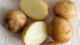 Картошечка боннот - самая ранняя дорогая из корнеплодов