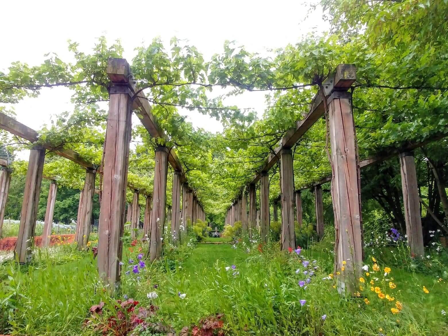 Các hầm trữ rượu nay được biến thành vườn rau, vườn nho