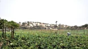 Autour des champs verdoyants de la famille Diop, les dunes de sables puis la mer.
