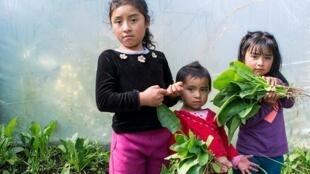 Agricultura familiar já começa a sentir os efeitos dos cortes do governo Bolsonaro.