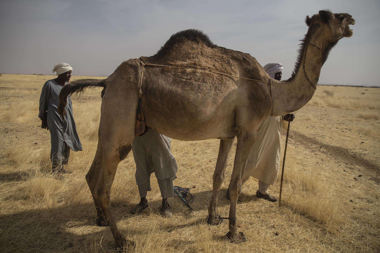 Arabes nomades - Darfour