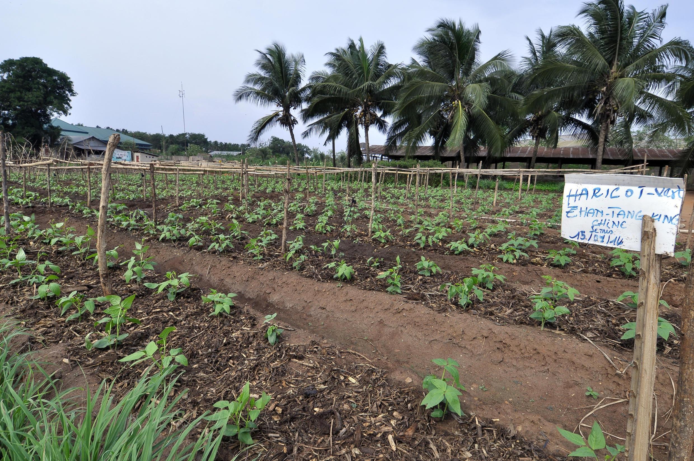L'antenne béninoise du centre mondial des cultures maraîchères travaille notamment à améliorer les semences de cultures ouest et centre africaines.