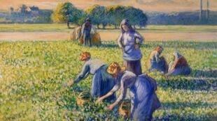 «La cueillette des pois», Camille Pissarro, 1887.