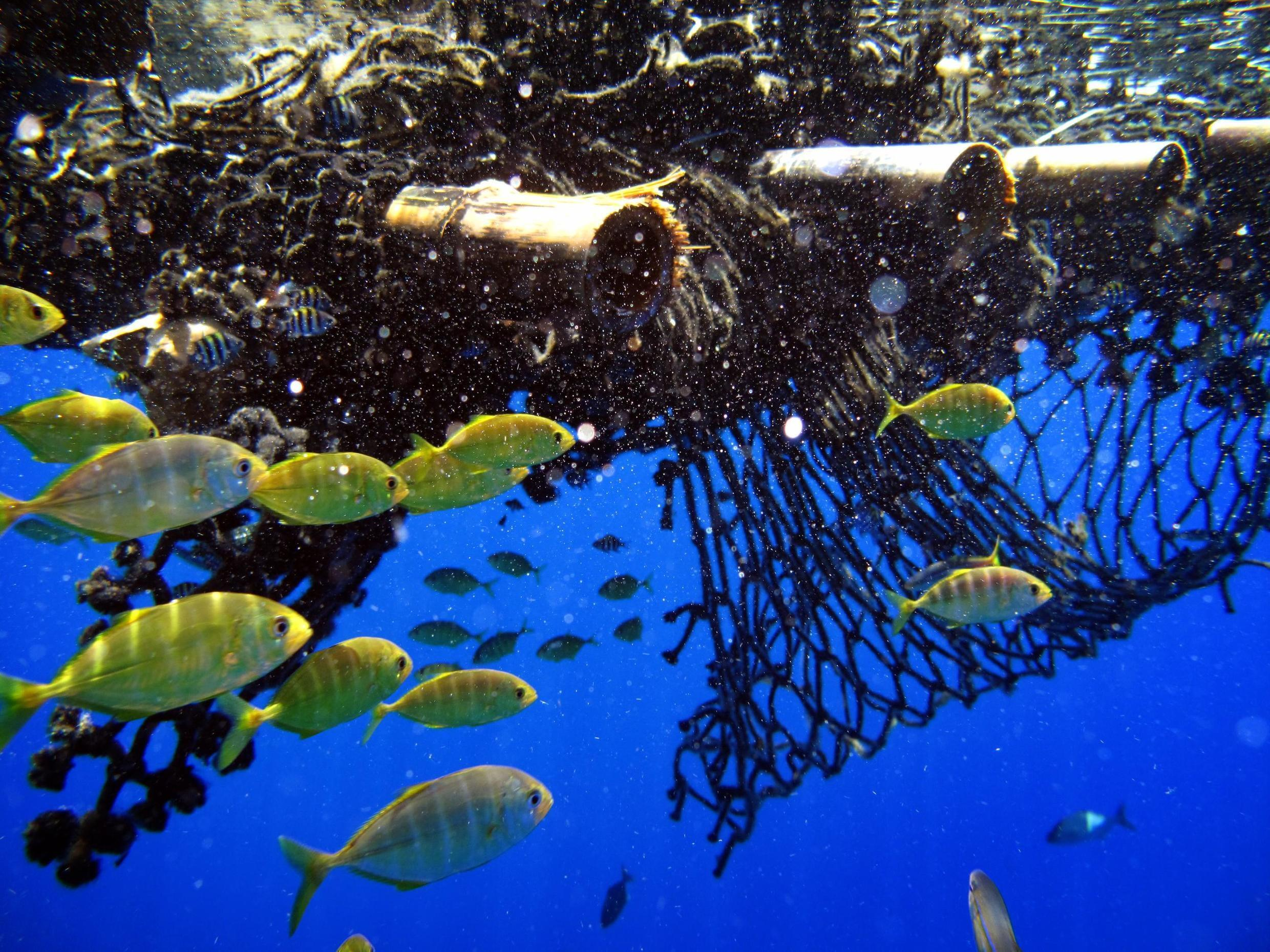 A FAD (Fish Aggregating Device) off the Comoros Islands in the Mozambique Channel, Indian Ocean. Greenpeace investigated fishing vessels operating illegally or using highly destructive and wasteful fishing techniques.