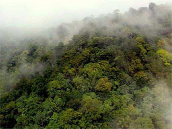 Parc Amazonien de Guyane. Le Mont Itoupé.